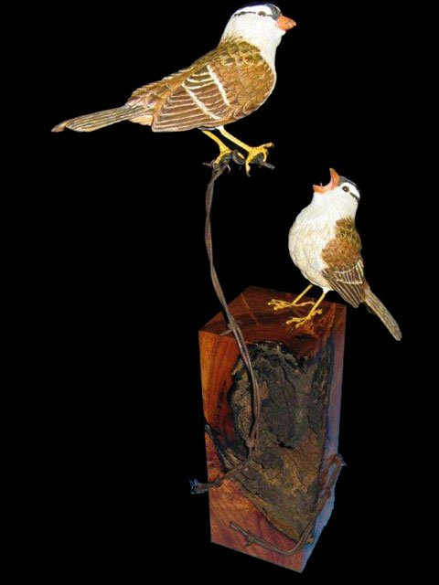 White Crowned Sparrows, Life Size