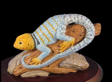 Flash of Blue Collared Lizard