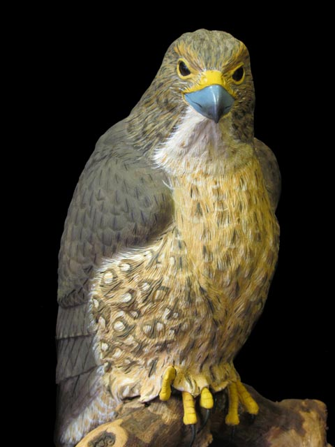 Merlin Falcon Close-up