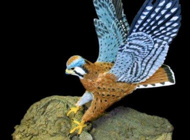 American Kestrel and Desert Spiny Lizard