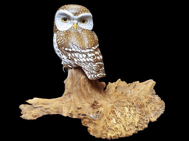 """Owl Watch"" Northern Pygmy Owl"