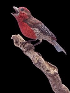 """""""Sunrise Greeting"""" House Finches"""